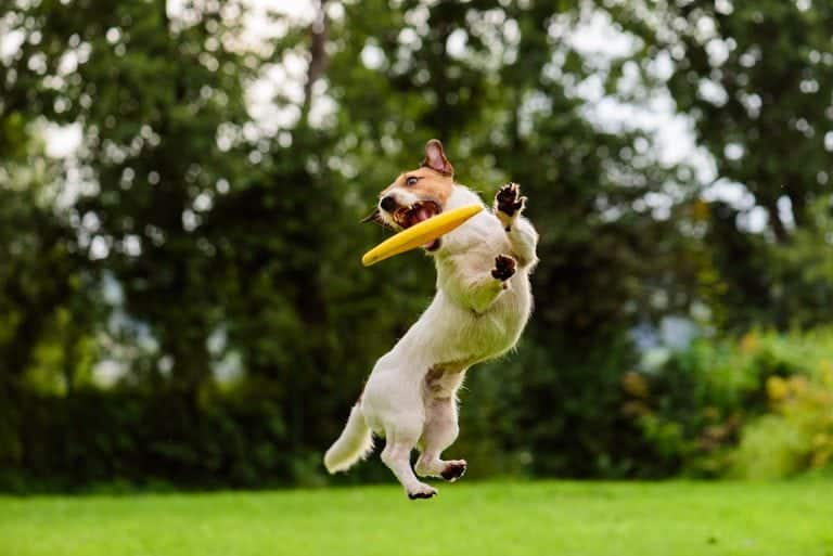 Active Dogs at Pet Ponderosa