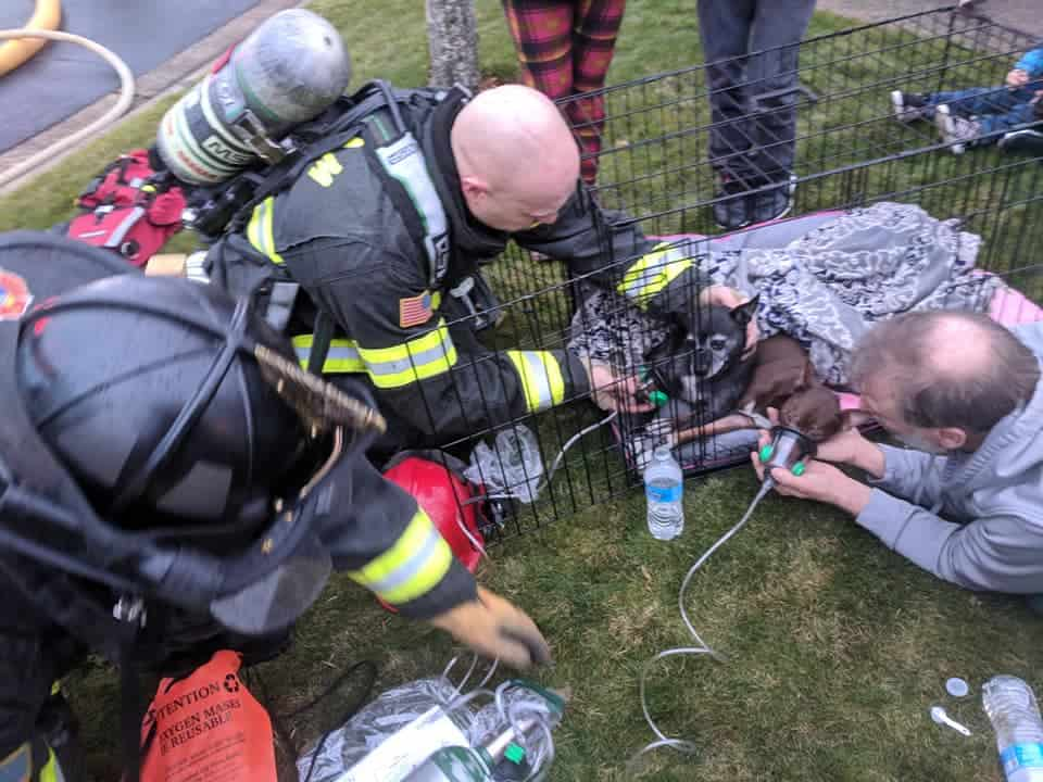 Donated Pet Oxygen Masks From Pet Ponderosa Already Saving Lives