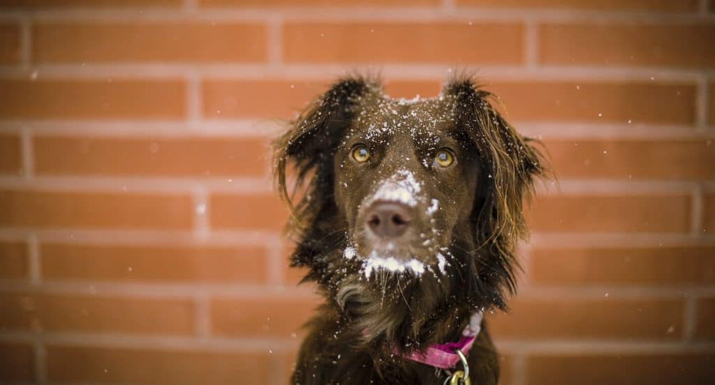 Keep Your Pets Warm! – A 10 Step Survival Guide To Braving The Sea-tac Cold Front