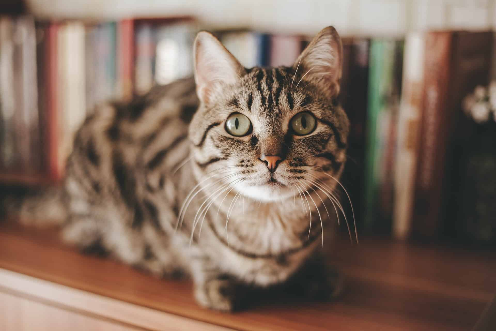 11 Cool Cat Facts For National Pet Day – April 11th