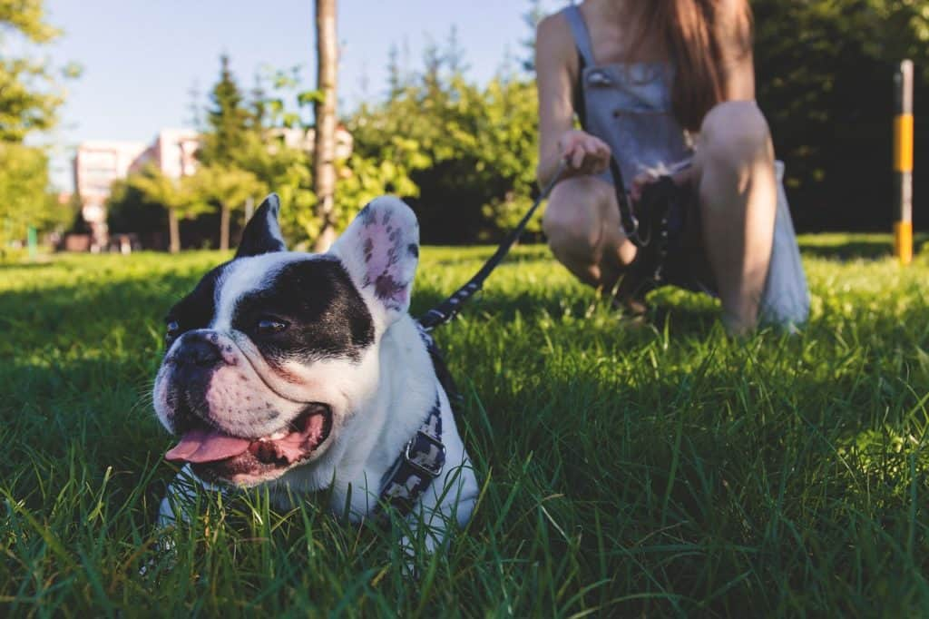 8 Top Dog-friendly Parks, Hikes, And Activities Near Graham, Wa