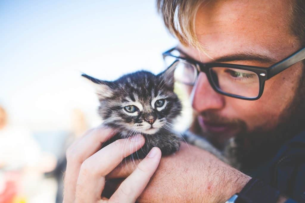 Best Cat Name Ideas – 30 Most Popular Male & Female Cat Names For 2019