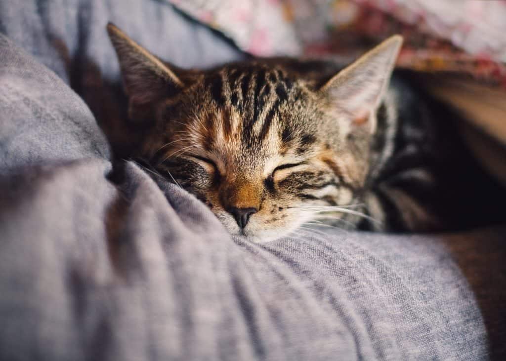 Cat Behaviors Explained: Purring