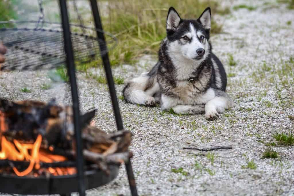 Dog Personalities By Breed: The Working Group