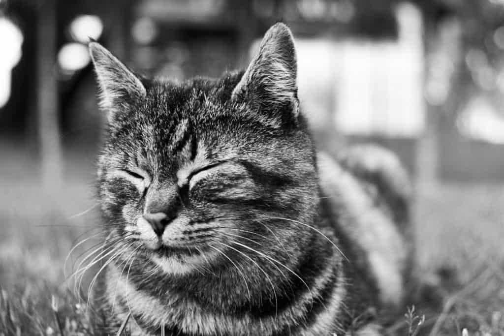 Cat Behaviors Explained: Staring And Blinking