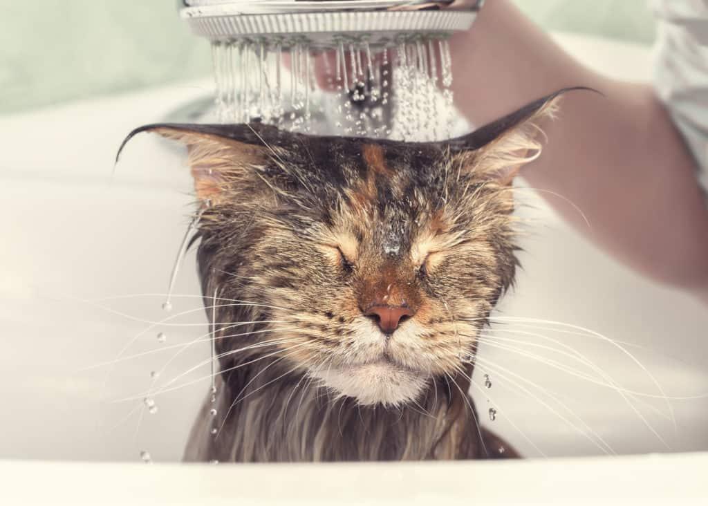 Do I Need To Bathe My Cat?