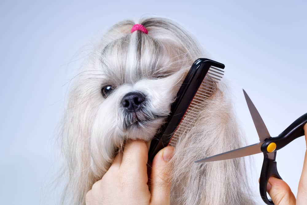 How Often Should I Have My Dog Groomed?