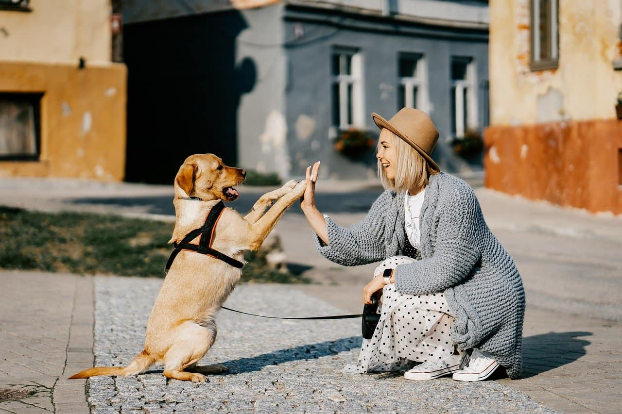How Much Attention Do Dogs Need?