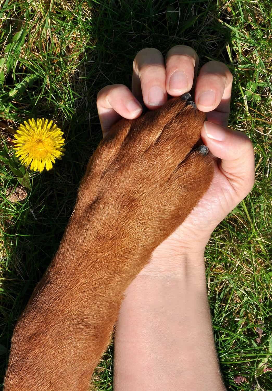 Why Choose Pet Ponderosa