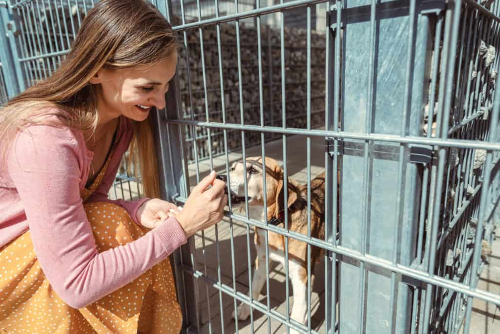 Five Tips For Choosing A New Family Dog