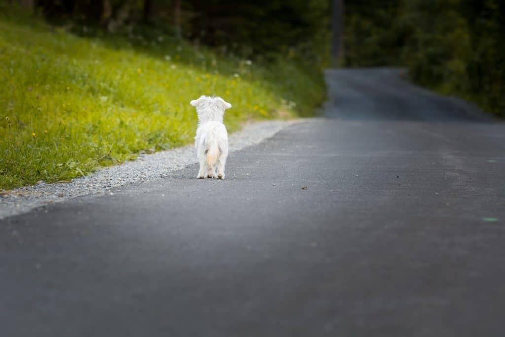 What To Do If Your Pet Runs Away