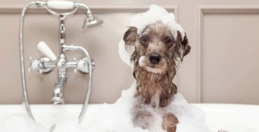 3 Tips For Bathing Your Dog At Home