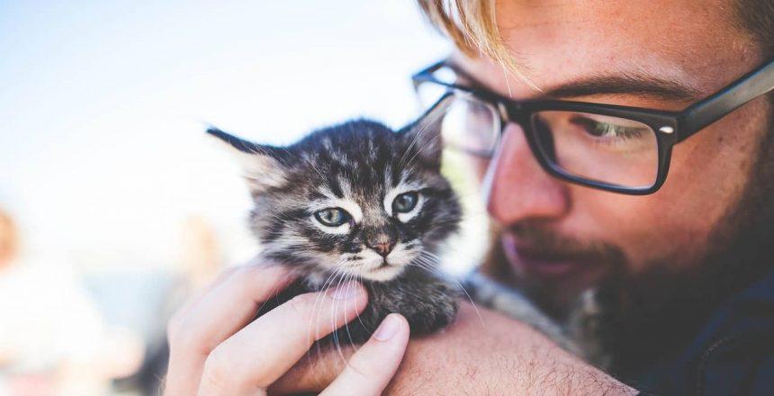 Best Cat Name Ideas