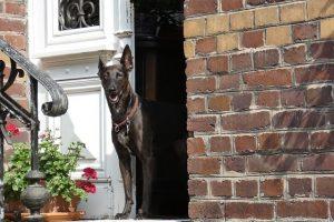 Dog Door Manners