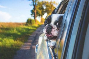 Intriguing Facts About Your Dog