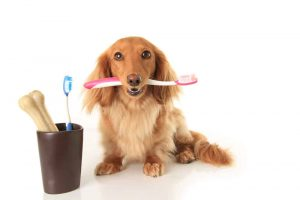 Should You Be Brushing Your Dog's Teeth?