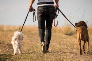 Dangers Of Walking Your Dog