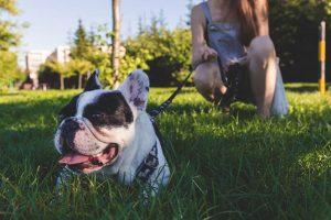 Graham WA pet friendly parks