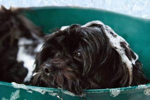 safe dog groomer